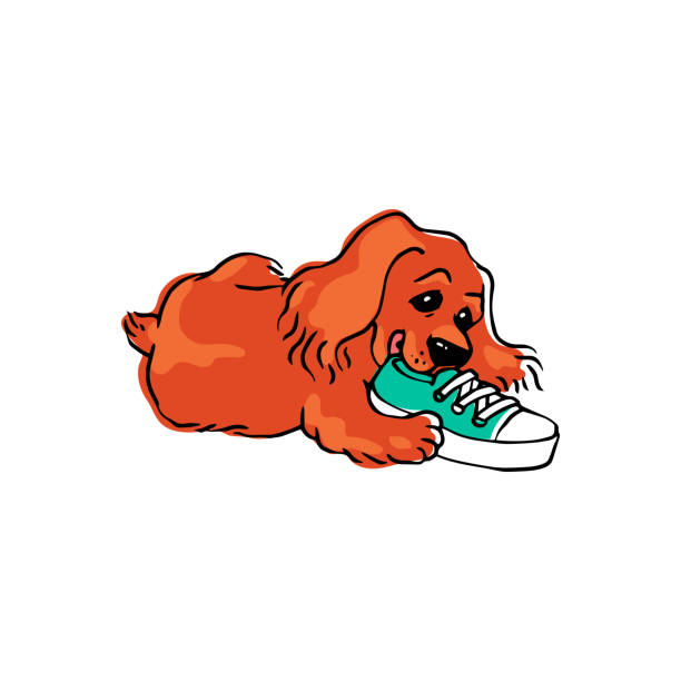 doggy and shoe cartoon.jpg